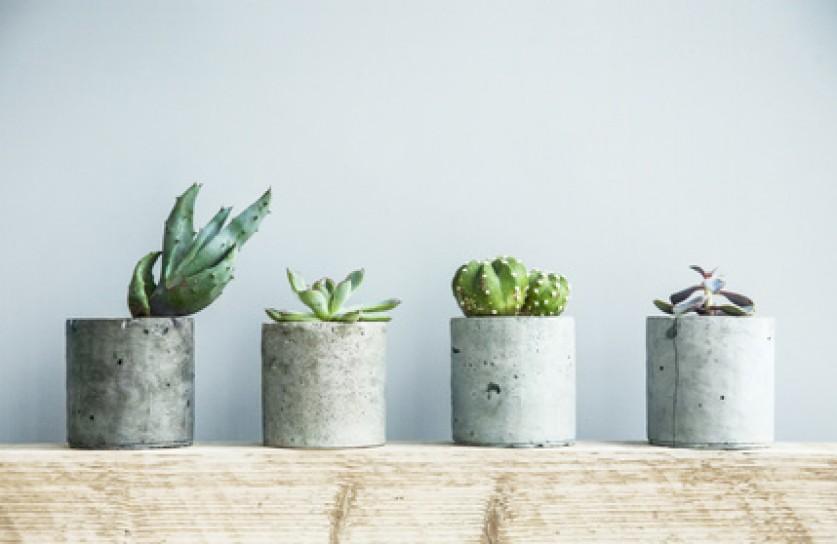 Comment d corer son int rieur avec des plantes vertes for Cactus d interieur
